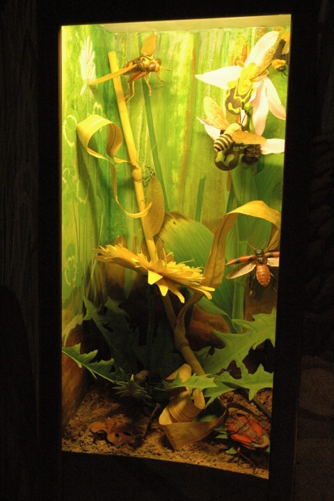 Sala Microambienti - Fili d'erba