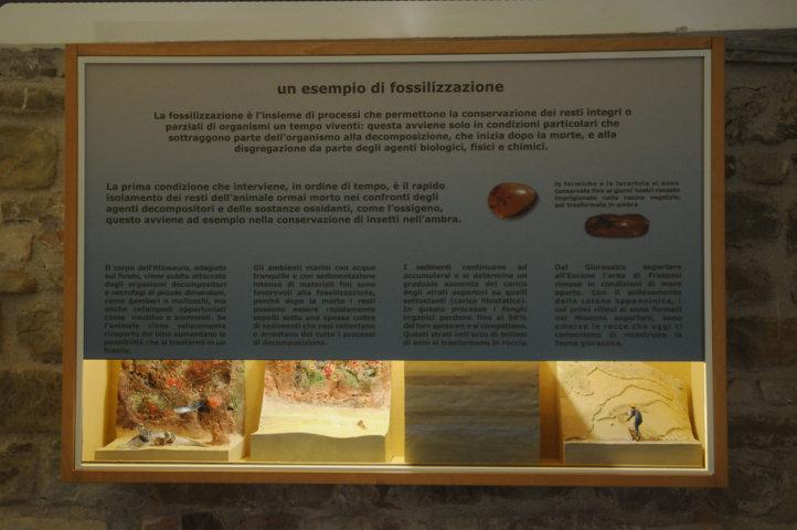 Fossilizzazione - Vista totale
