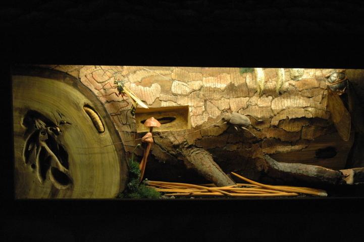Sala Microambienti - Dentro un tronco