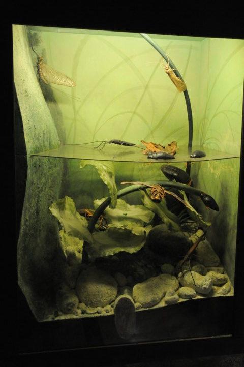 Sala Microambienti - nell'acqua