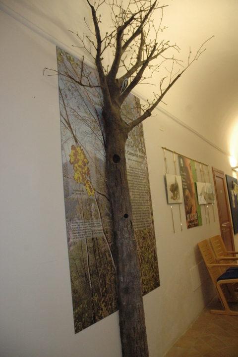 Alberi Appenninici - Modello di Carpino con nido di Picchio