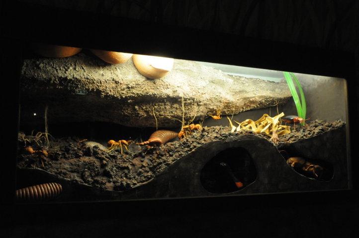 Sala Microambienti - sotto un sasso