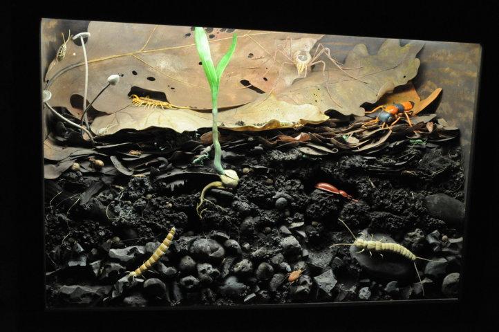 Sala Microambienti - nel terreno