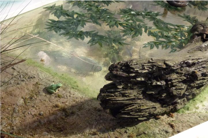 Finzioni Exhibits - diorama