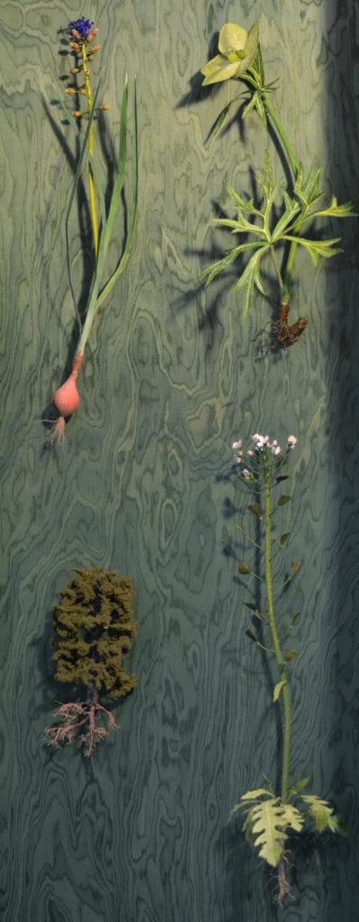 Museo della Biodiversità - Apparati radicali