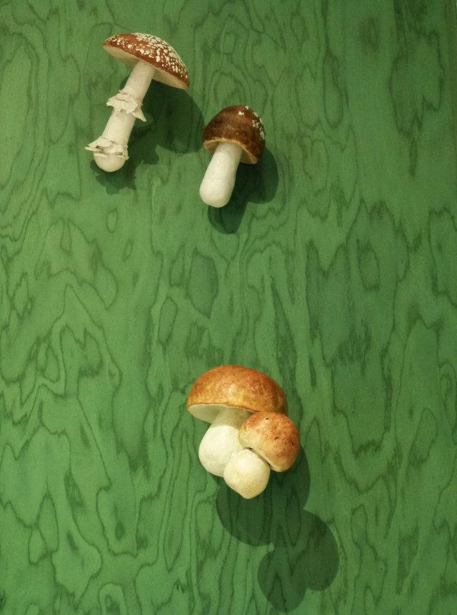 Museo della Biodiversità - Boletus aestivalis + Amanita pantherina