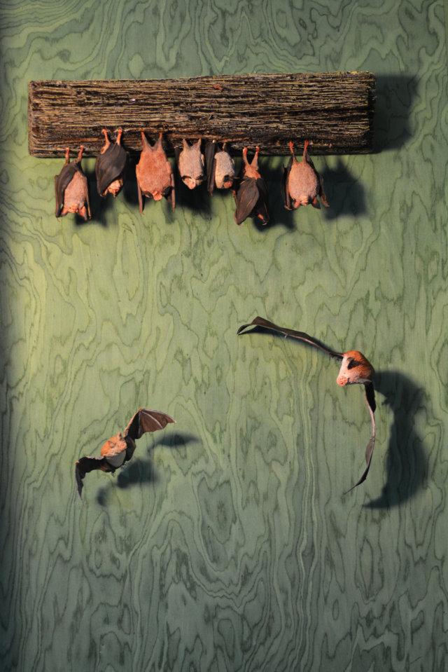 Museo della Biodiversità - Chirotteri