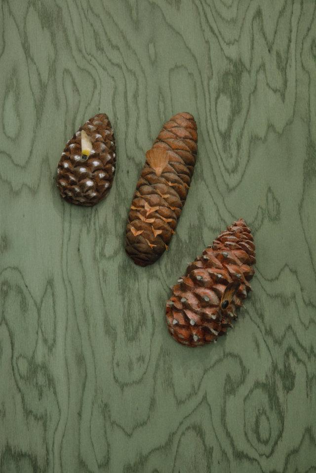 Museo della Biodiversità - Coni con semi