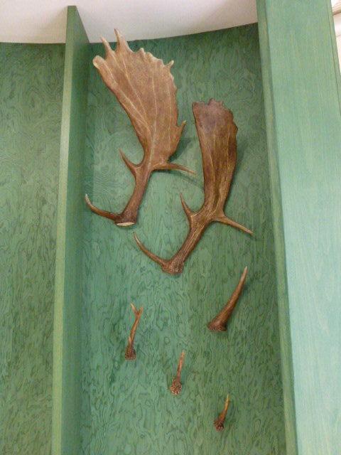 Museo della biodiversità -  Palchi Daino e Capriolo