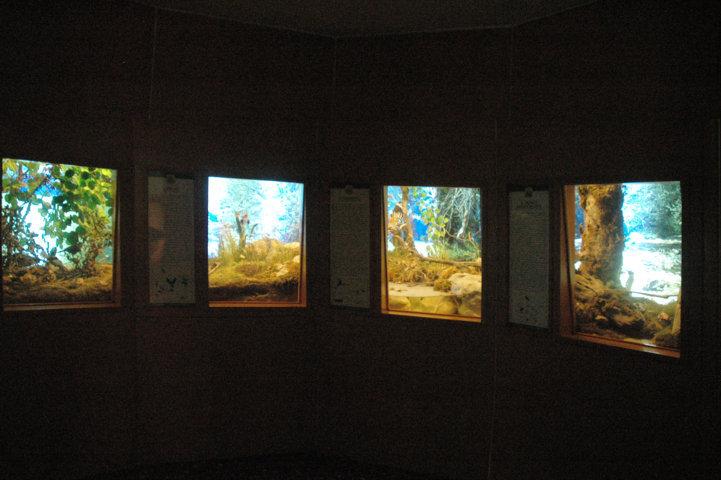 Sala microambienti - alcune vetrine