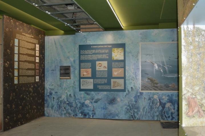 Museo Acquario del lago Trasimeno - Area paleontologica