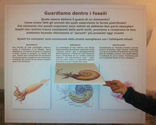 Dentro i fossili - Pannello