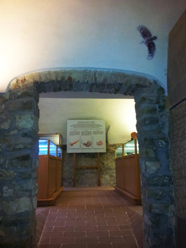 Dentro i fossili - Ingresso sala