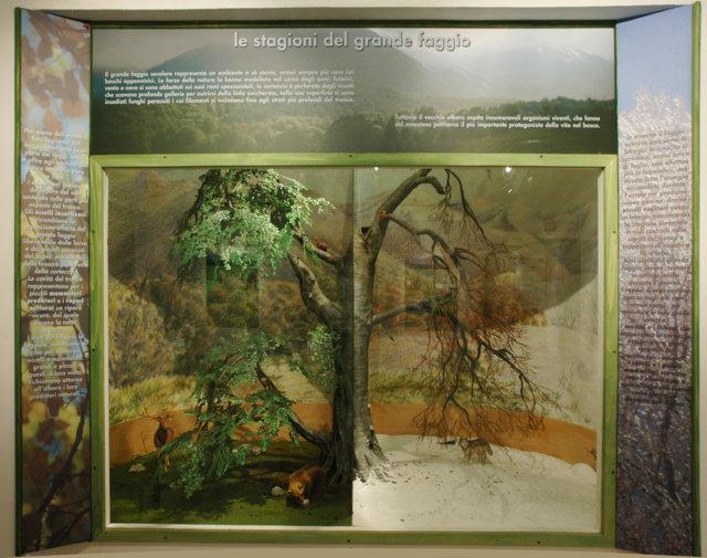 Museo della Lince - le stagioni del grande Faggio