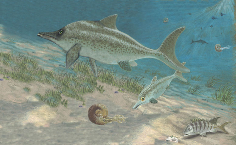 l'ittiosauro di Genga