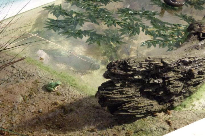 Particolare del diorama del Lago di Serranella