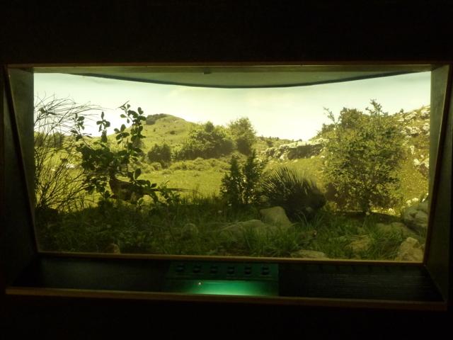 Vista totale del diorama Prati e Cespugli