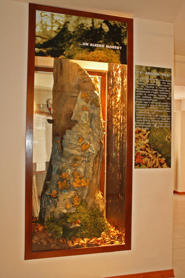 Museo della Lince - tronco