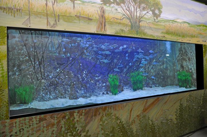 Museo Acquario del lago Trasimeno - vasca Persico reale