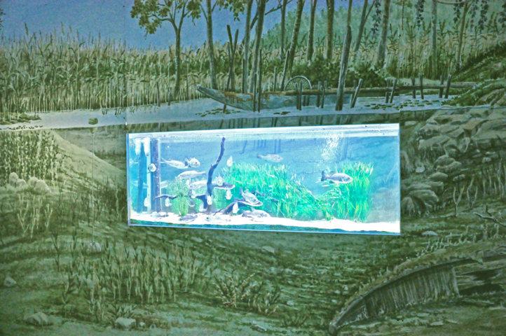 Museo Acquario del lago Trasimeno - Vasca sponde lago - allestimenti museali