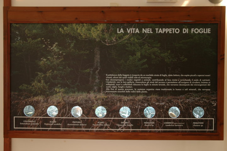 Museo della Lince - vetrina Humus