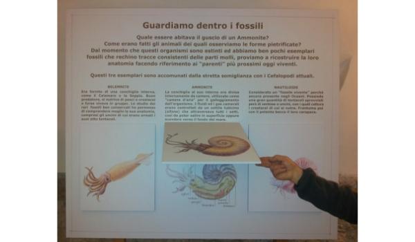 dentro i fossili