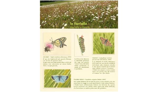pannello farfalle