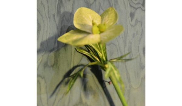 modelli di fiori e radici