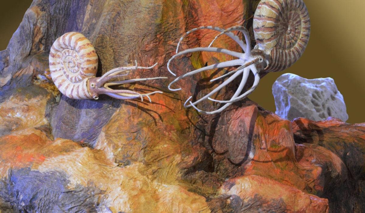 Ammoniti -Allestimenti Museali
