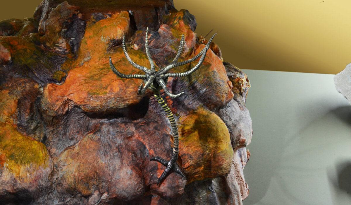 Crinoide -Allestimenti Museali