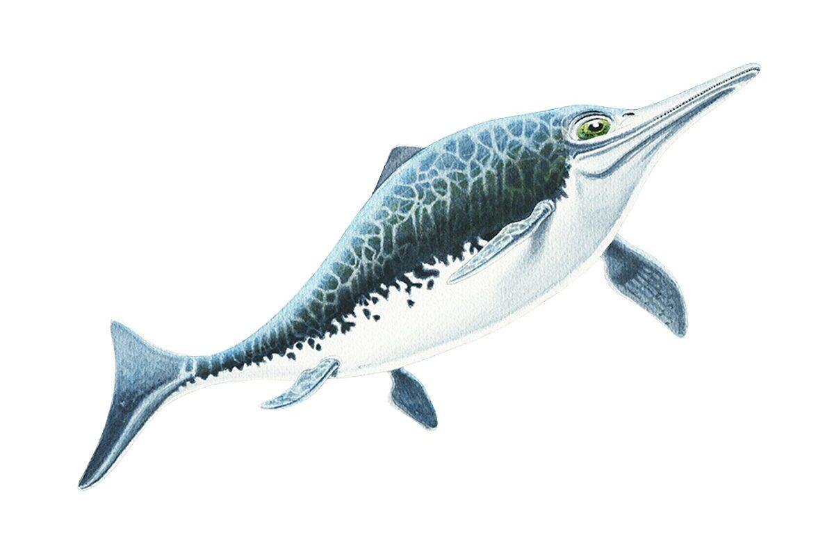 Icthyosaurus Allestimenti Museali