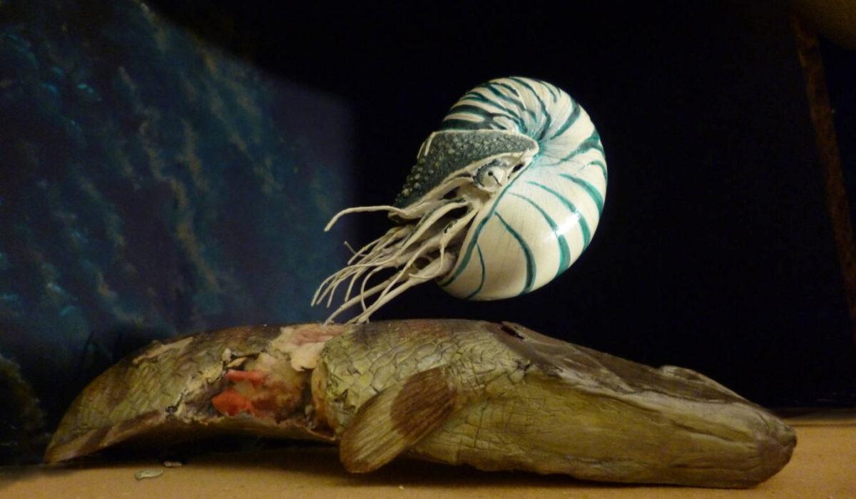 Nautiloide su Carcassa di Lepidotes -Allestimenti Museali