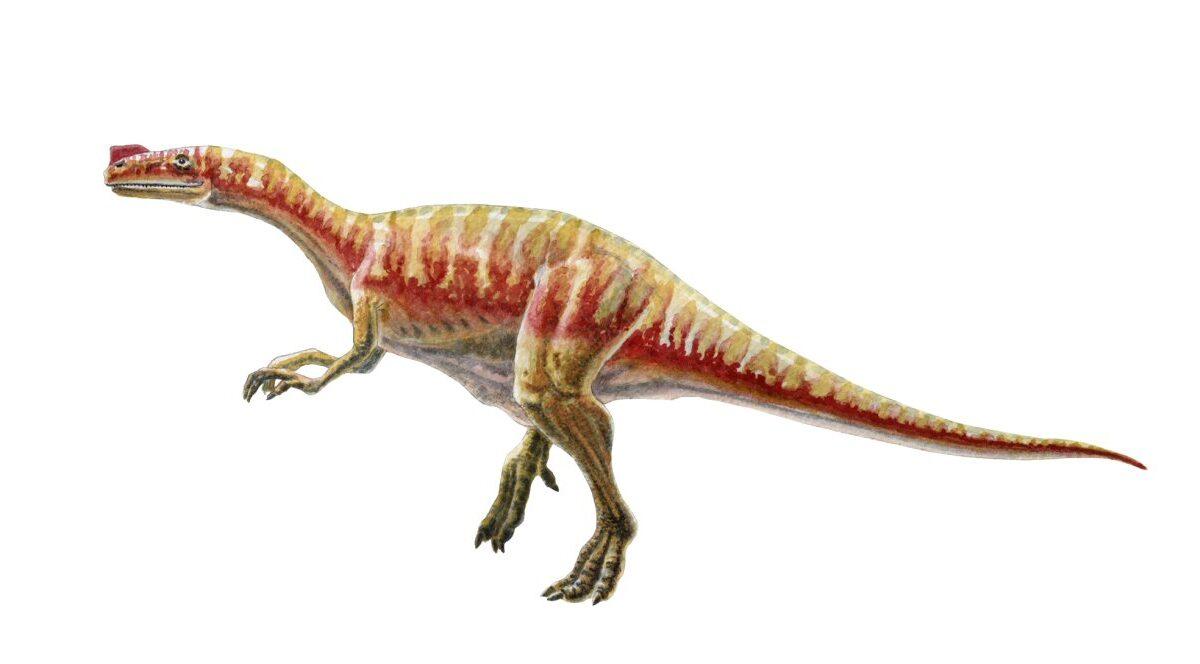 Proceratosaurus Allestimenti Museali